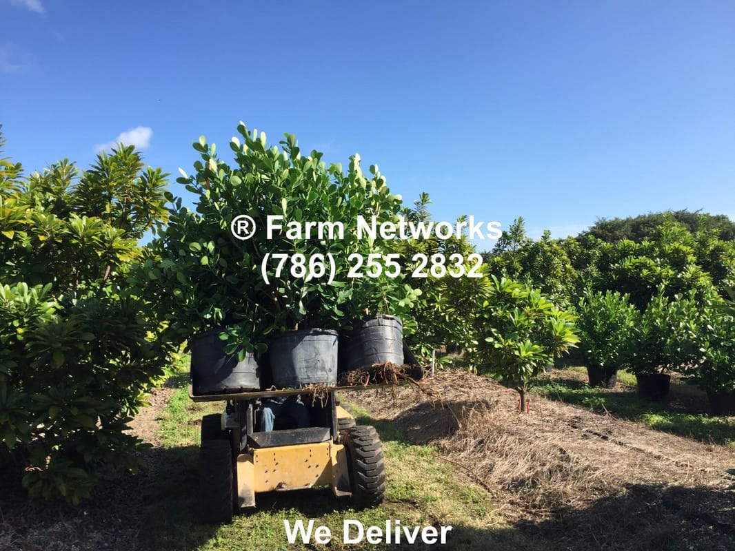 West Palm Beach Garden Center (786) 255 2832 We Deliver - 15 Gallon ...